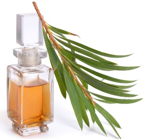 Tea Tree Oil for Psoriasis Treatment